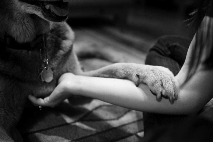 Трогательное прощание (24 фото)