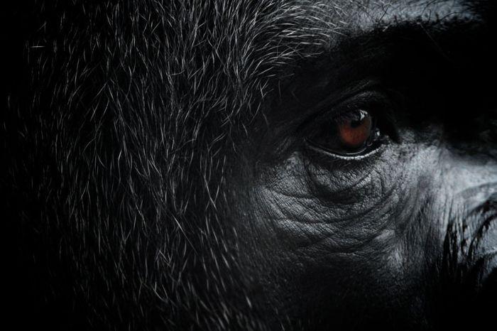 Лучшие фотографии от National Geographic (39 фото)
