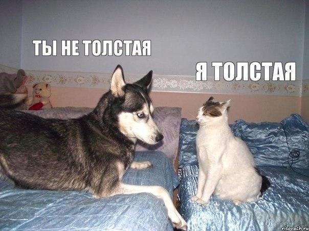 http://cdn.trinixy.ru/pics5/20131125/podborka_135.jpg