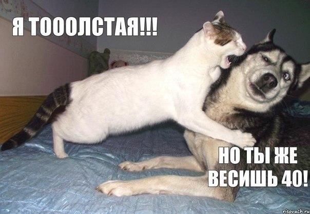 http://cdn.trinixy.ru/pics5/20131125/podborka_136.jpg