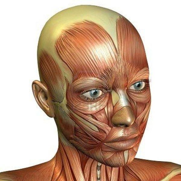 Факты о человеческом теле (14 фото)