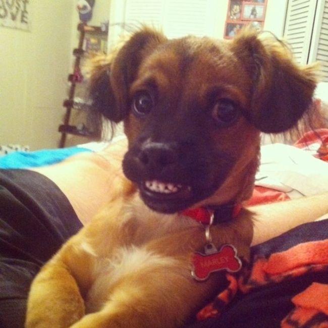 Прикольные и смешные снимки собак за 2013 год (39 фото)