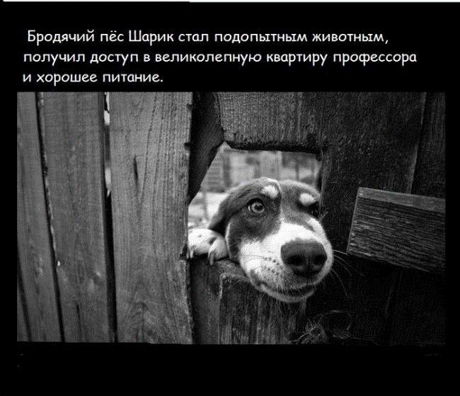 """Факты о кинофильме """"Собачье сердце"""" (18 фото)"""