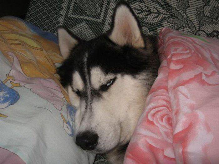 Что такое собака в доме? (31 фото)