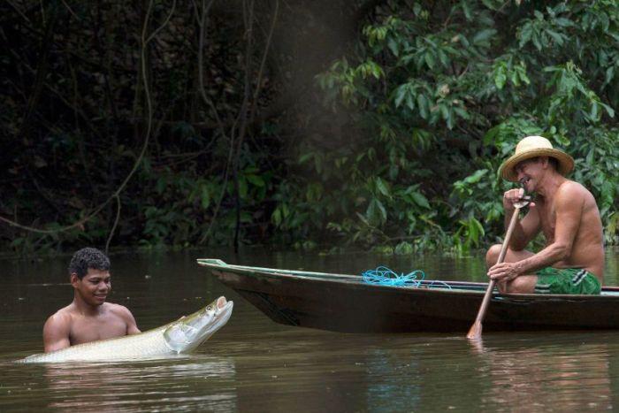 Охота на древнего пресноводного хищника в Бразилии (18 фото)