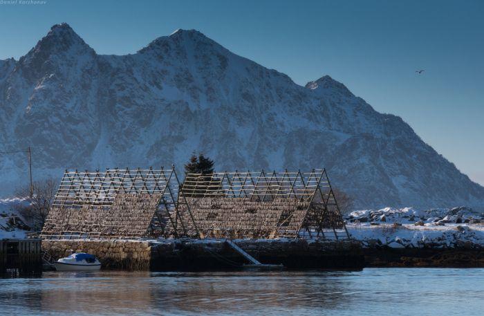 Куда уплывает российская треска (33 фото)