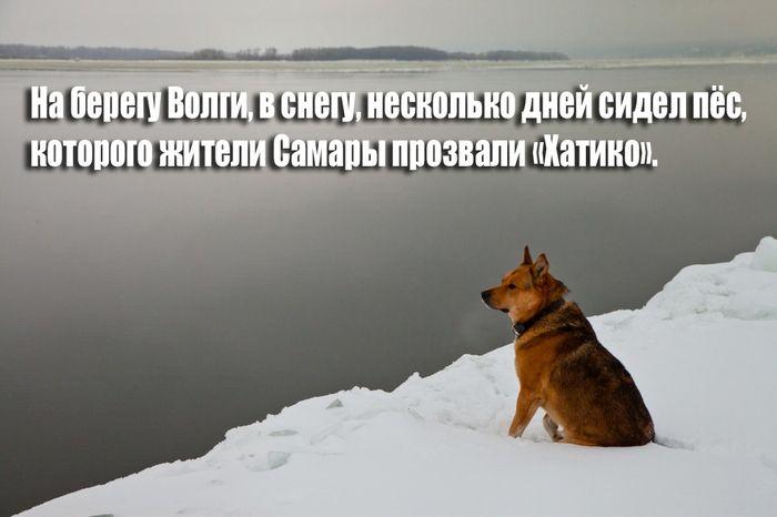 Преданный пес из Самары (9 фото)