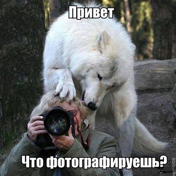 Прикольные картинки (82 фото)