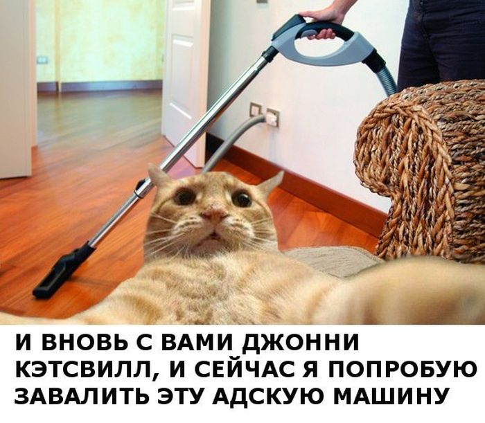 Новый интернет-мем - Джонни Кэтсвилл (52 фото)