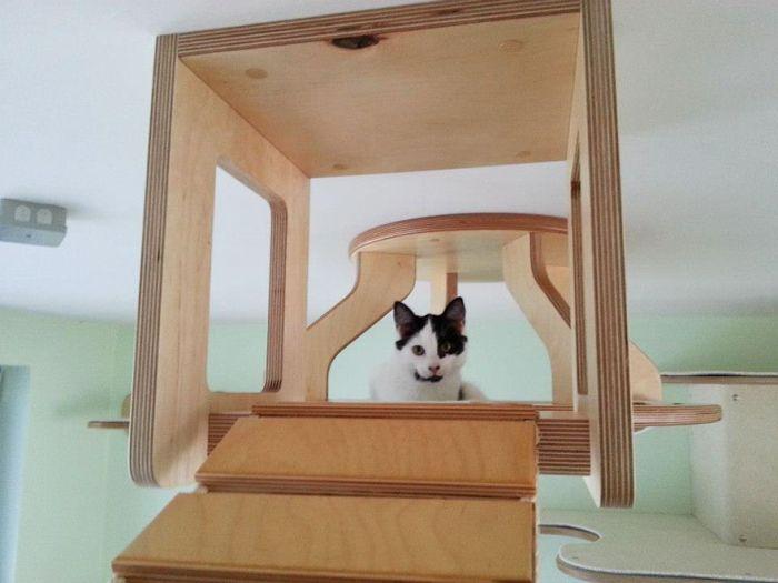 Рай для котов (10 фото)