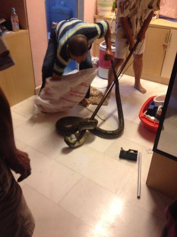 Нежданный гость проник в дом через унитаз (4 фото)