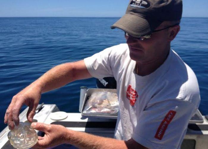 Очень необычный улов у берегов Новой Зеландии (3 фото)