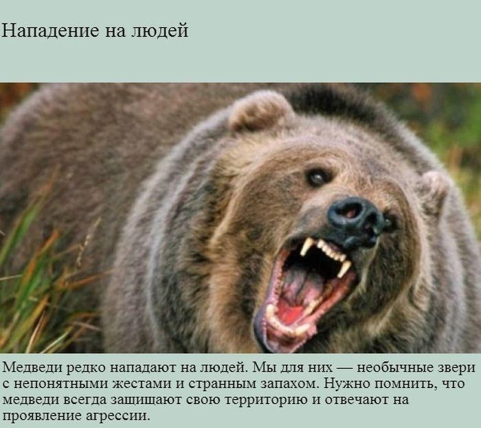 Интересно о медведях (9 фото)