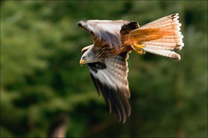 Фэйл во время охоты хищника (7 фото)