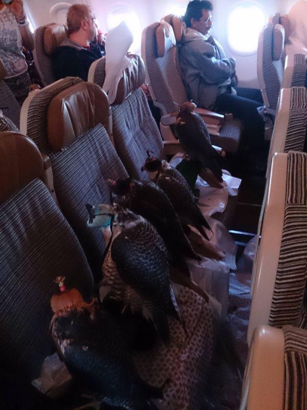 Странный пассажир (4 фото)