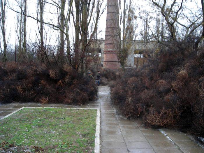 Перекати-поле захватили крымский посёлок (8 фото)