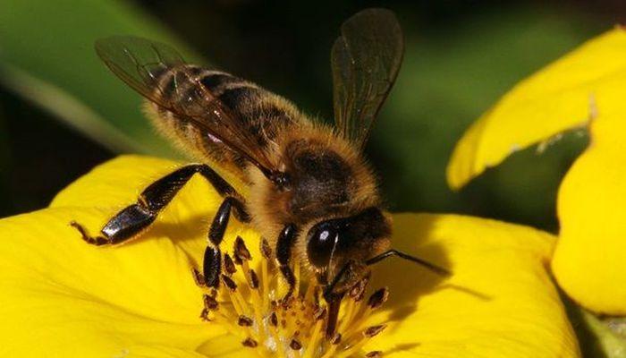 Рейтинг самых смертельно опасных животных и насекомых в мире (19 фото)