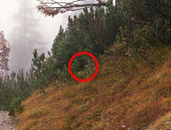 Пост-загадка: Найдите снайпера на фотографии (18 фото)