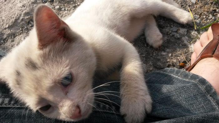 Как один парень спас котенка по кличке Луна (15 фото)