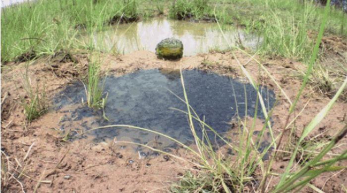 Мама-жаба и её детёныши (5 гифок)
