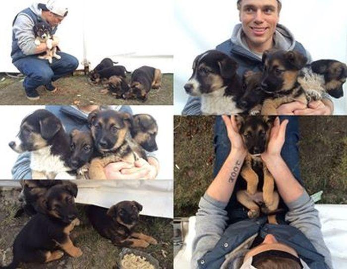 Олимпийский спортсмен Гас Кенуорти увезет из Сочи щенят (3 фото)
