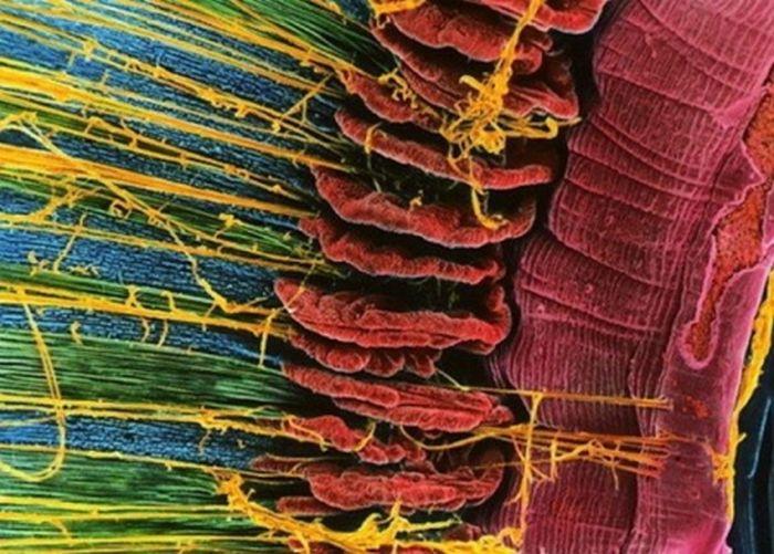 Человек под микроскопом (10 фото)