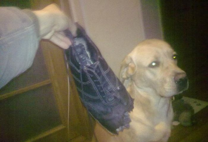 Если оставить собаку одну дома (14 фото)