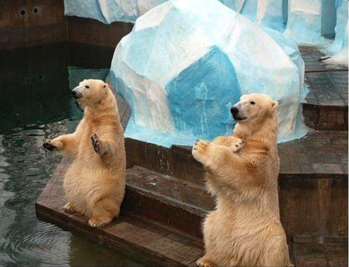 В Новосибирском зоопарке родился медвежонок (8 фото)