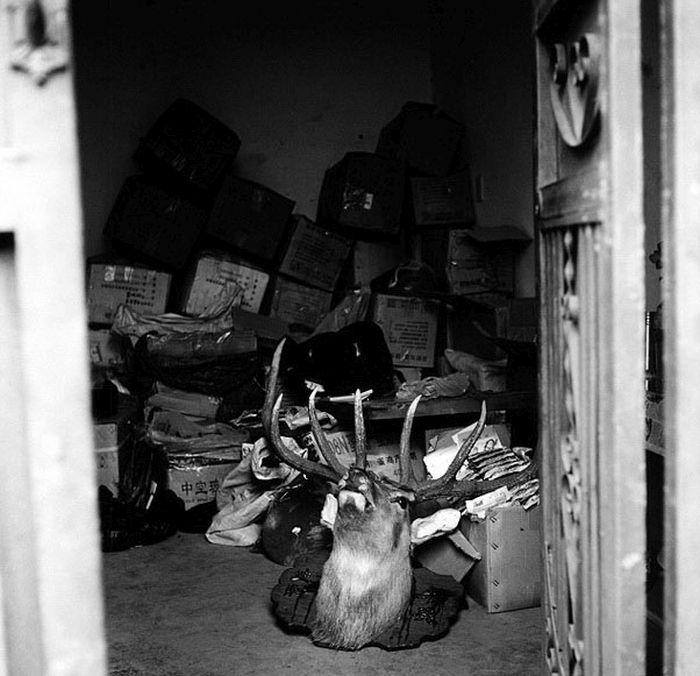 Контрабанда дикой природы (12 фото)