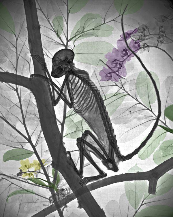 Животные под рентгеном (18 фото)