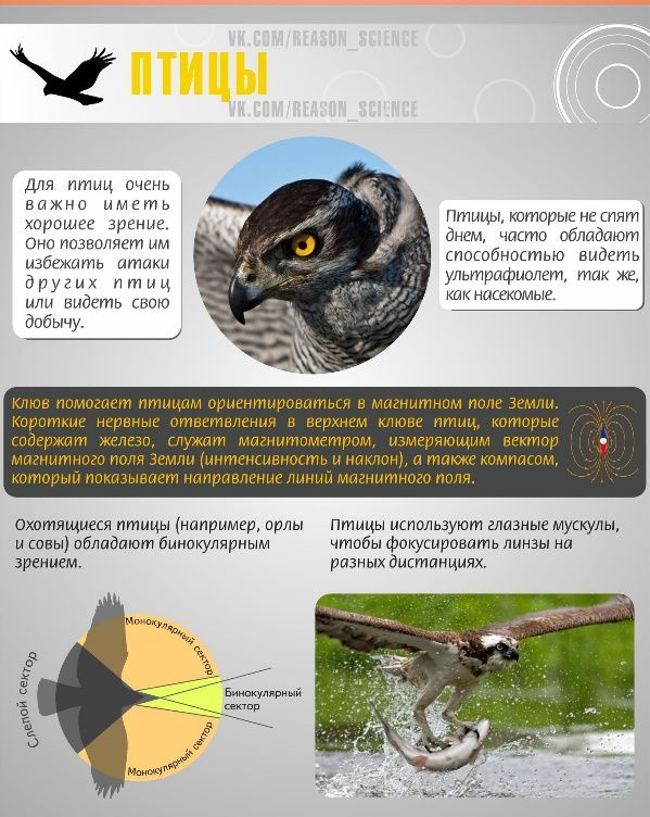 Как животные смотрят на мир (8 фото)