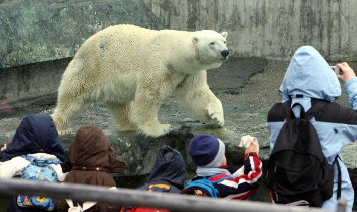 Что обнаружили в желудке у медведя (2 фото)