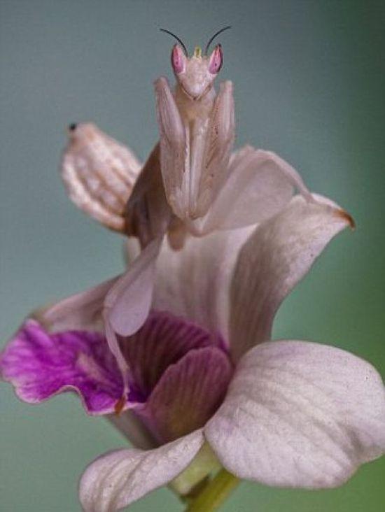 Коварный цветок орхидеи (3 фото)