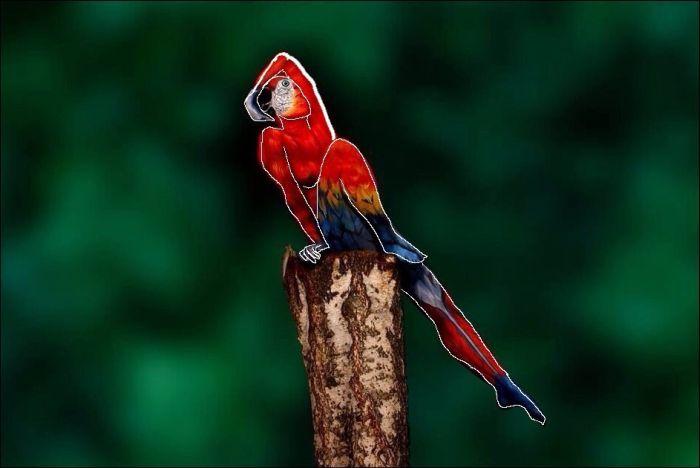 Тест на внимательность: снимок попугая (4 фото)