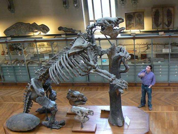 Los animales extintos más impresionantes de la historia