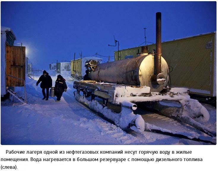 Жизнь в суровых условиях арктической тундры (23 фото)