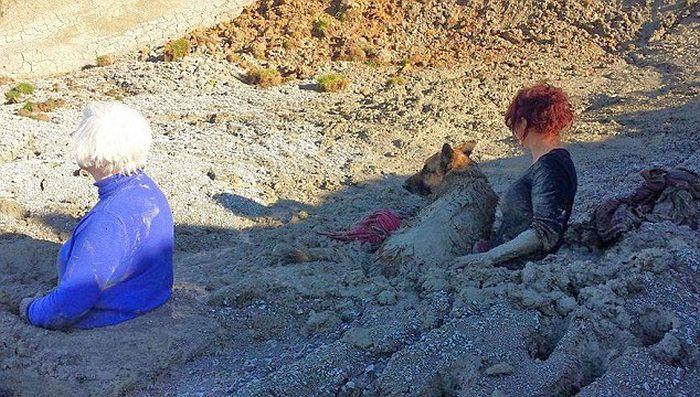 Попали в ловушку, пытаясь спасти свою собаку (7 фото)