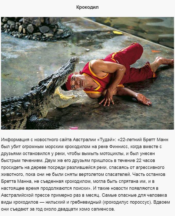 Существа, которых стоит бояться (19 фото)
