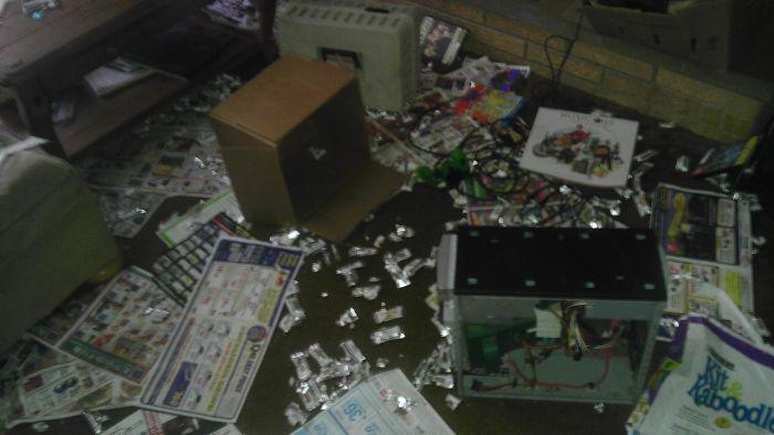 Еноты пробрались в жилой дом (10 фото)