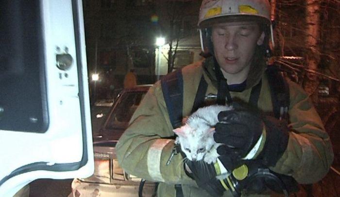 В Петербурге пожарные спасли кошек от пожара (7 фото)