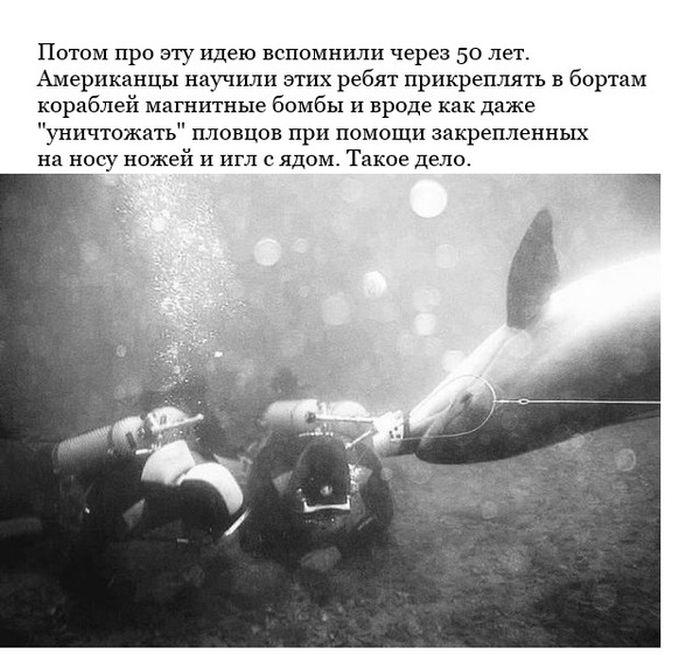 Крымские боевые дельфины теперь служат ВМФ России (6 фото)