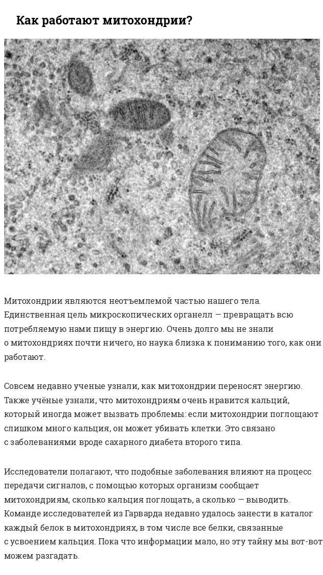 Загадки тела человека, на которые у современной науки нет ответов (10 фото)