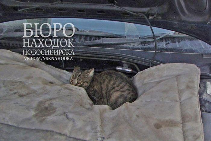 """""""Подкапотный"""" кот (7 фото)"""
