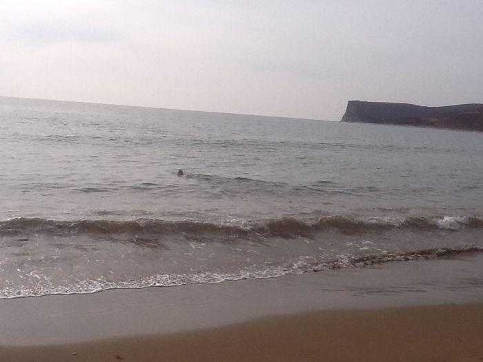Морской лев заблудился в лесу (22 фото)