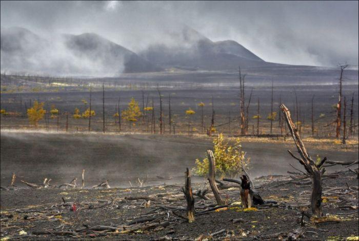 """Таинственный """"Мертвый лес"""" на Камчатке (8 фото)"""