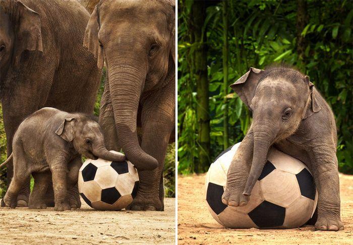 Животные, которые стали звездами интернета (9 фото)
