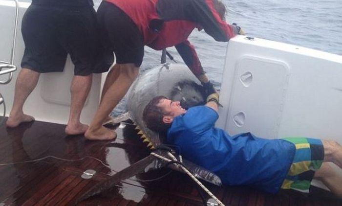 Рыбачка вытянула гигантского 400-килограммового тунца (6 фото)