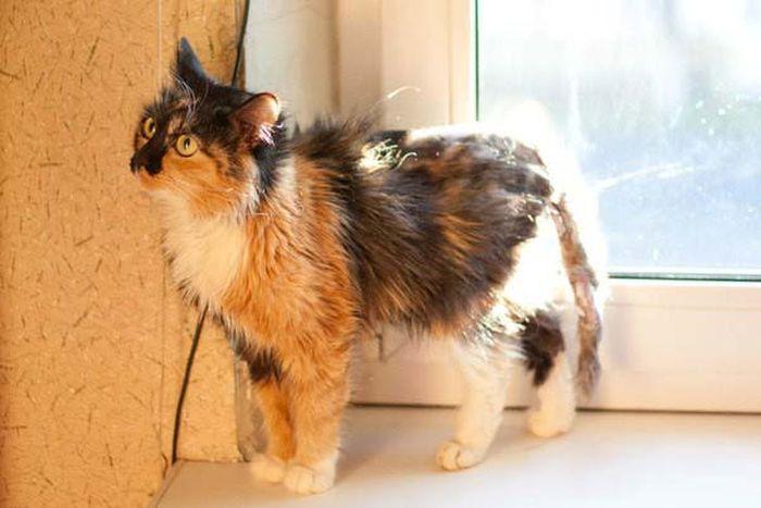 Новая жизнь сбитой кошки (23 фото)