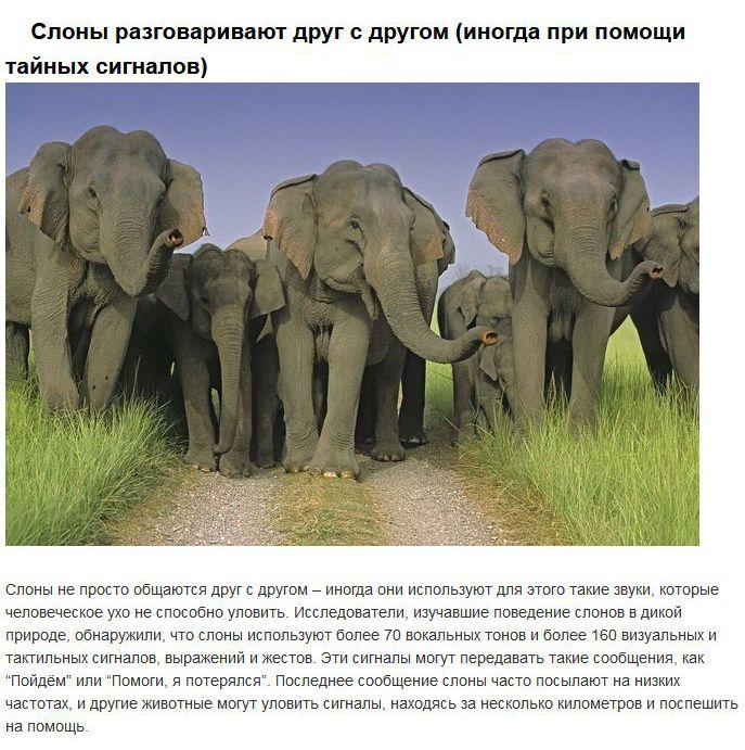 Продвинутая социальная жизнь некоторых диких животных (10 фото)