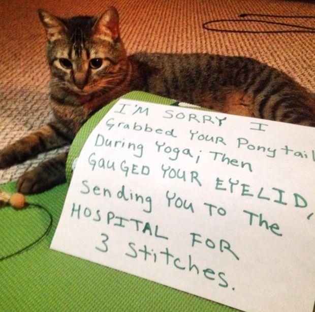 Неудачное завершение знакомства с котенком (3 фото)